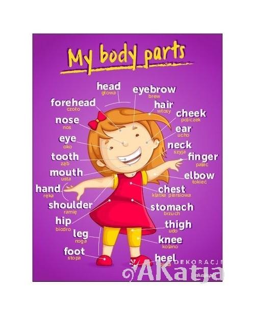My body parts -plansza z zawieszką